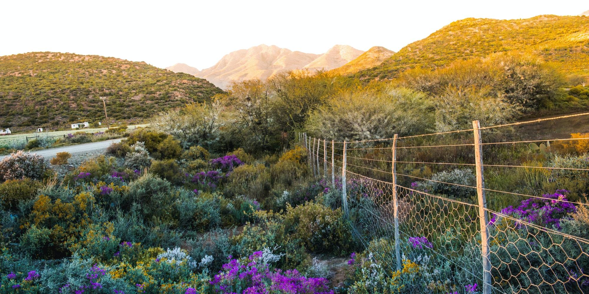 Mountain scenery Cape Town Tourism 1