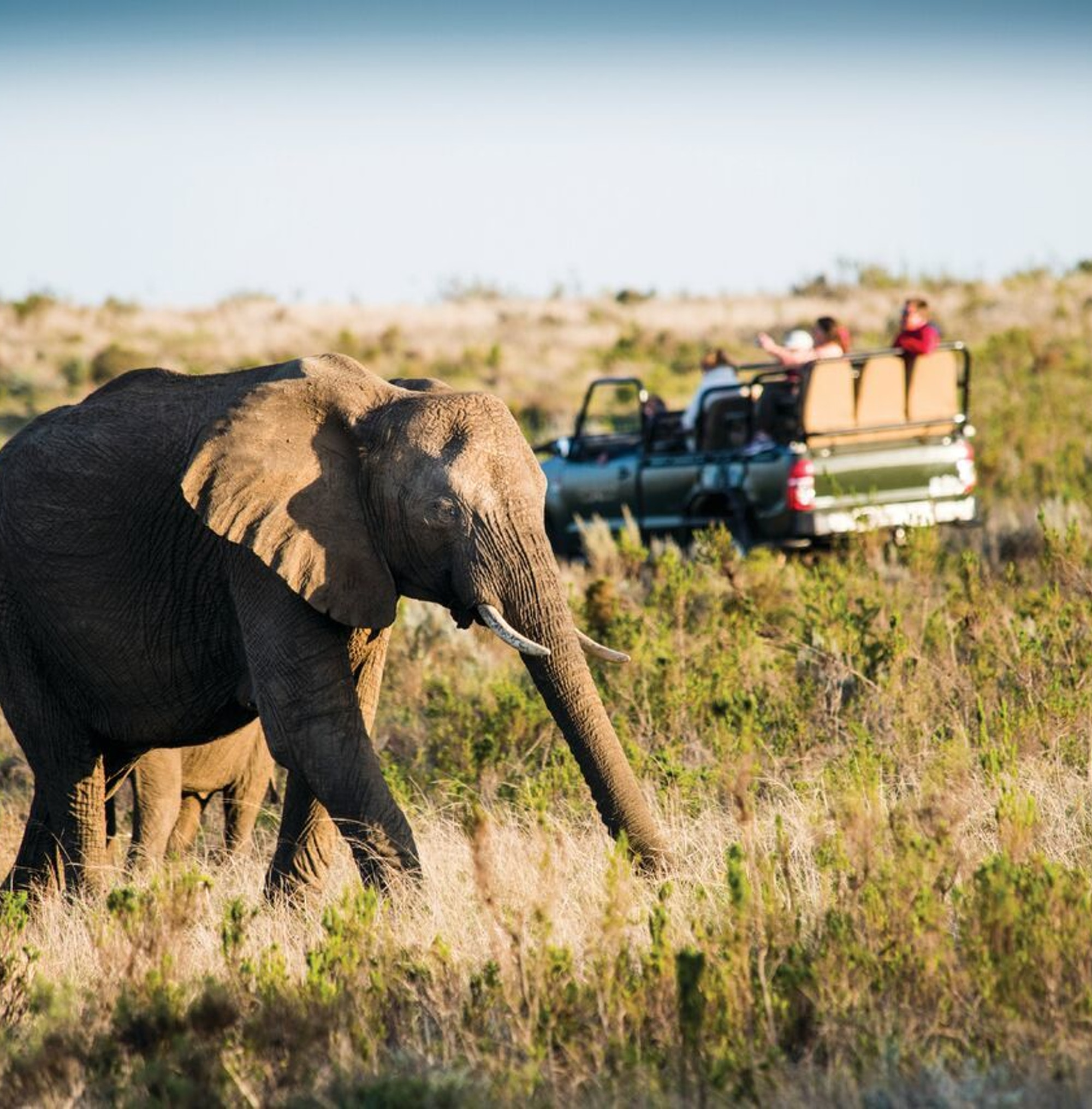 Gondwana Game Drive 2