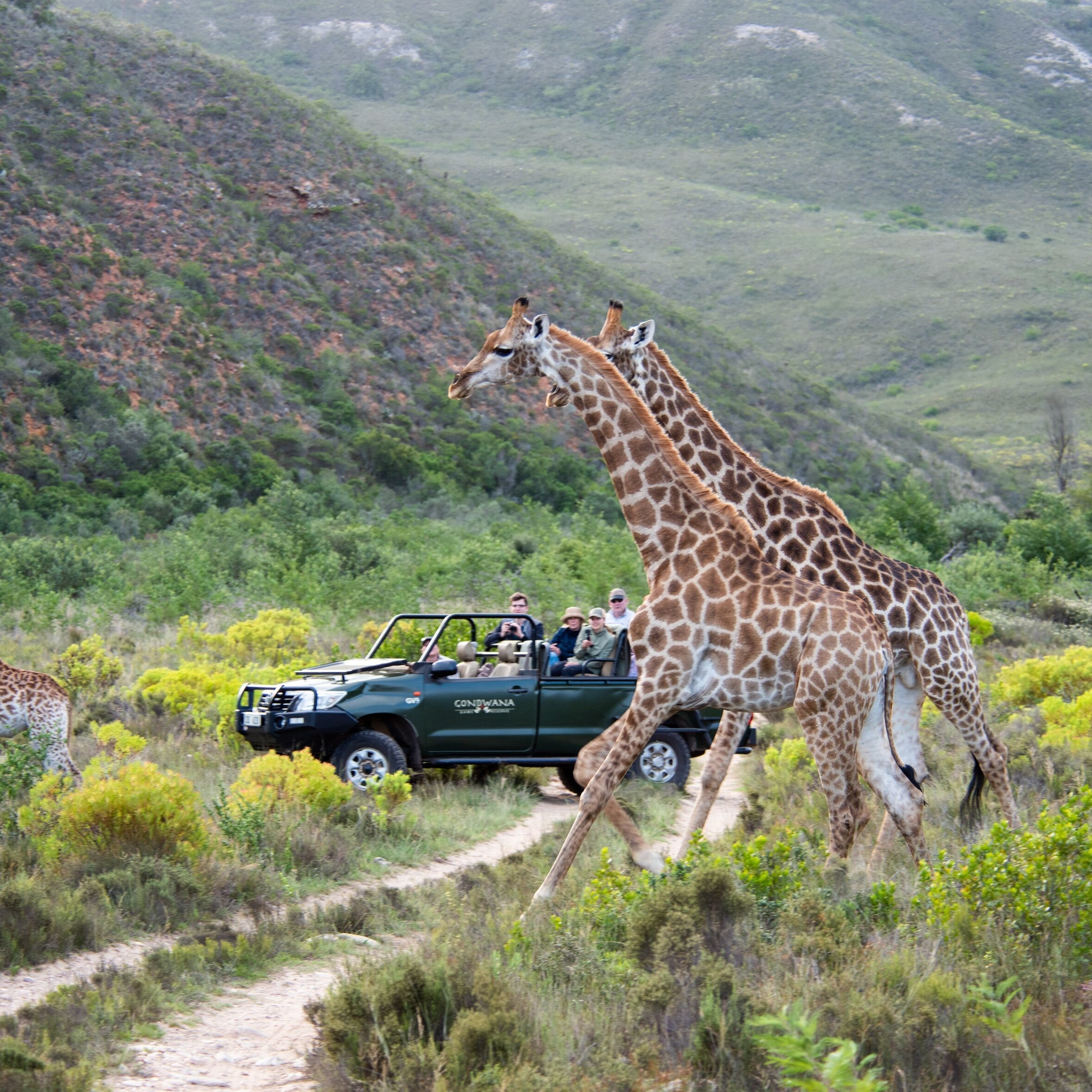 Gondwana Game Drive 3
