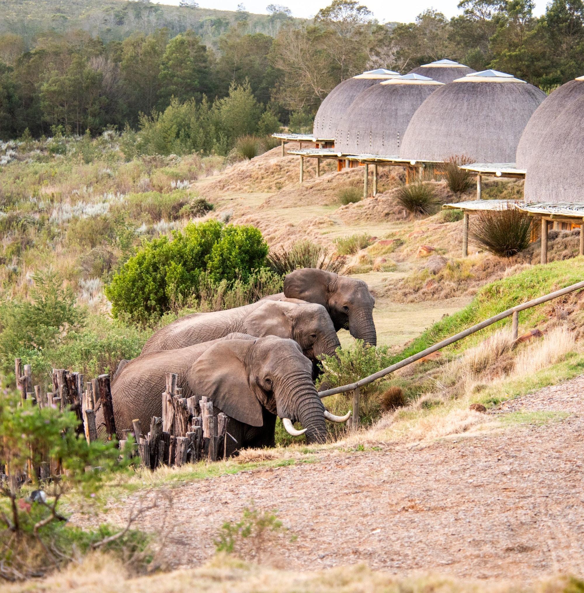 Gondwana Kwena Lodge 5