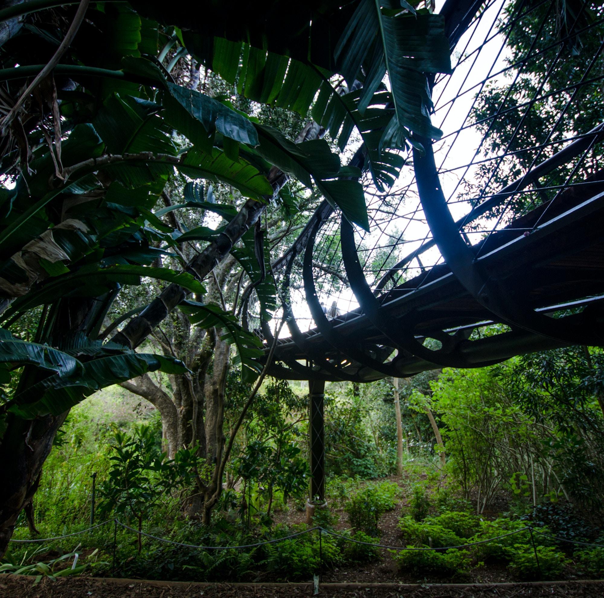 Top Attractions Kirstenbosch CTT Kirstenbosch Boomslang c Lisa Burnell 22 1