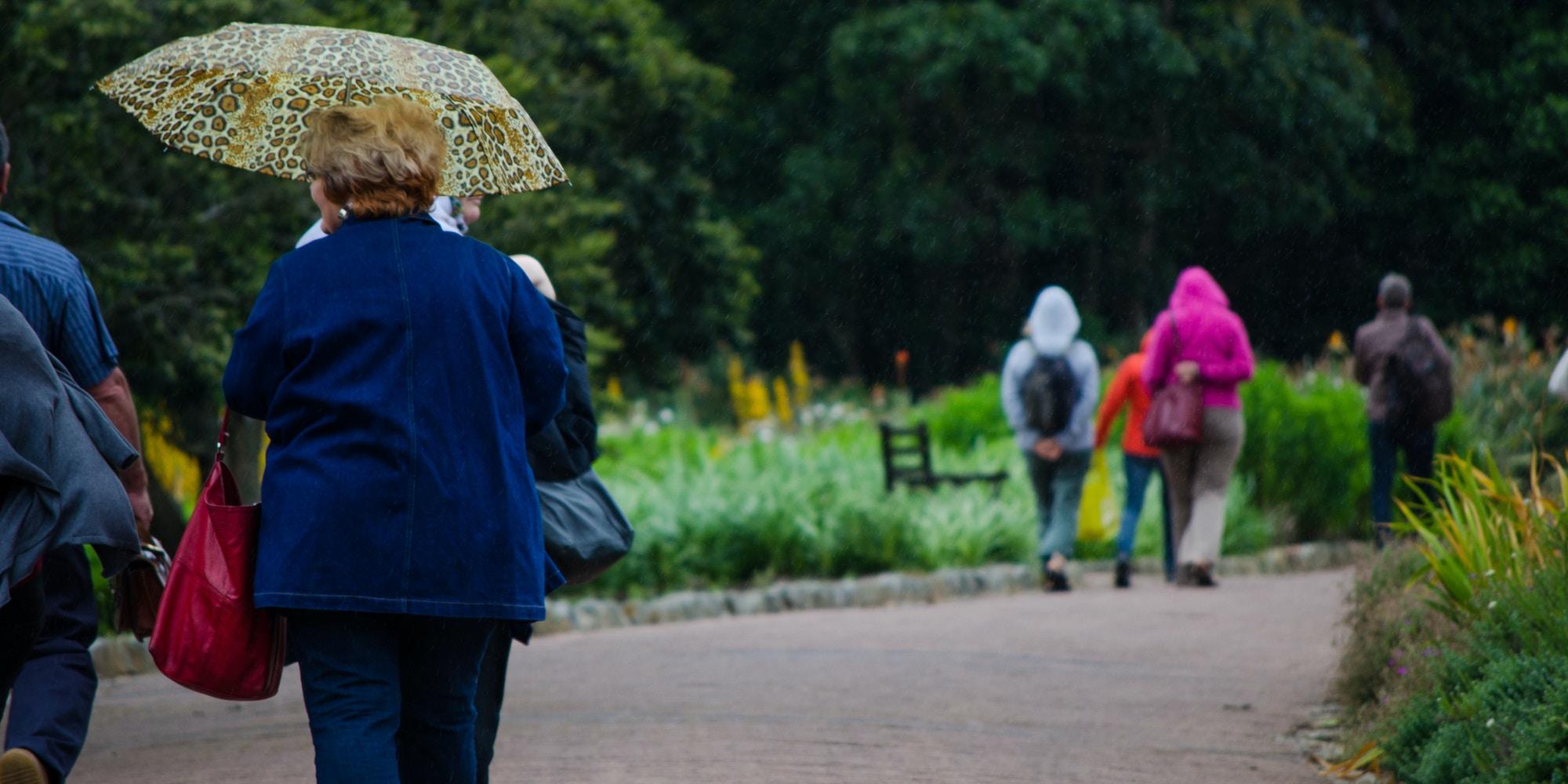 Top Attractions Kirstenbosch CTT Kirstenbosch Gardens c Lisa Burnell 14 1